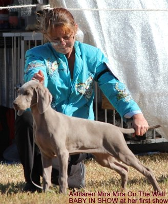 3-Mira at her first show Baby in Show at Dubbo 4th May 2013.JPG